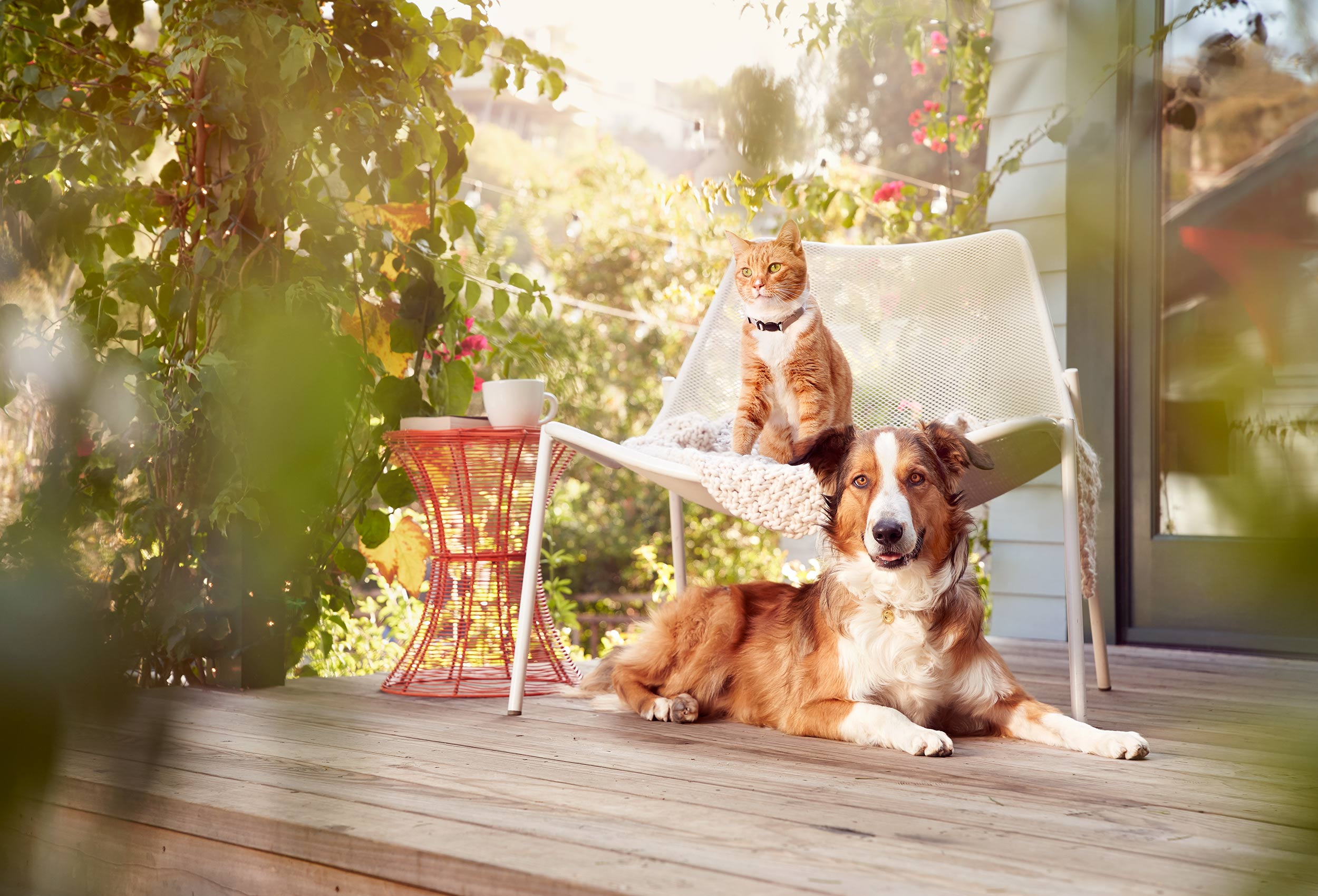 Purina_Beyond_LA_60295_V2